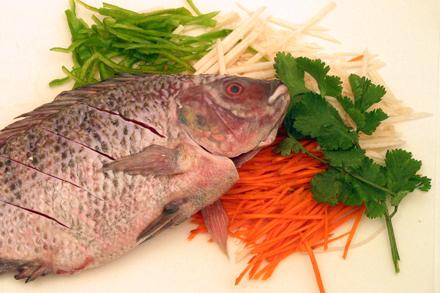 Image result for Tilapija riba