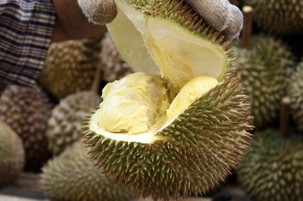 Cracking Open a Durian